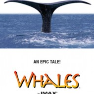 whales….