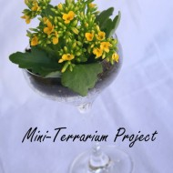A Mini-Terrarium Project…