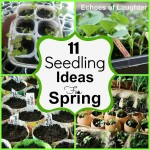 11 Seedling Ideas for Spring