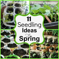 11 Seedling Ideas for Spring