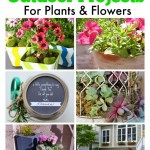 6 Amazing Flower & Plant Projects