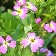 My Flower Garden: Week 7
