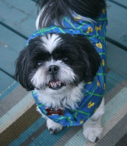 Rigley in Raincoat